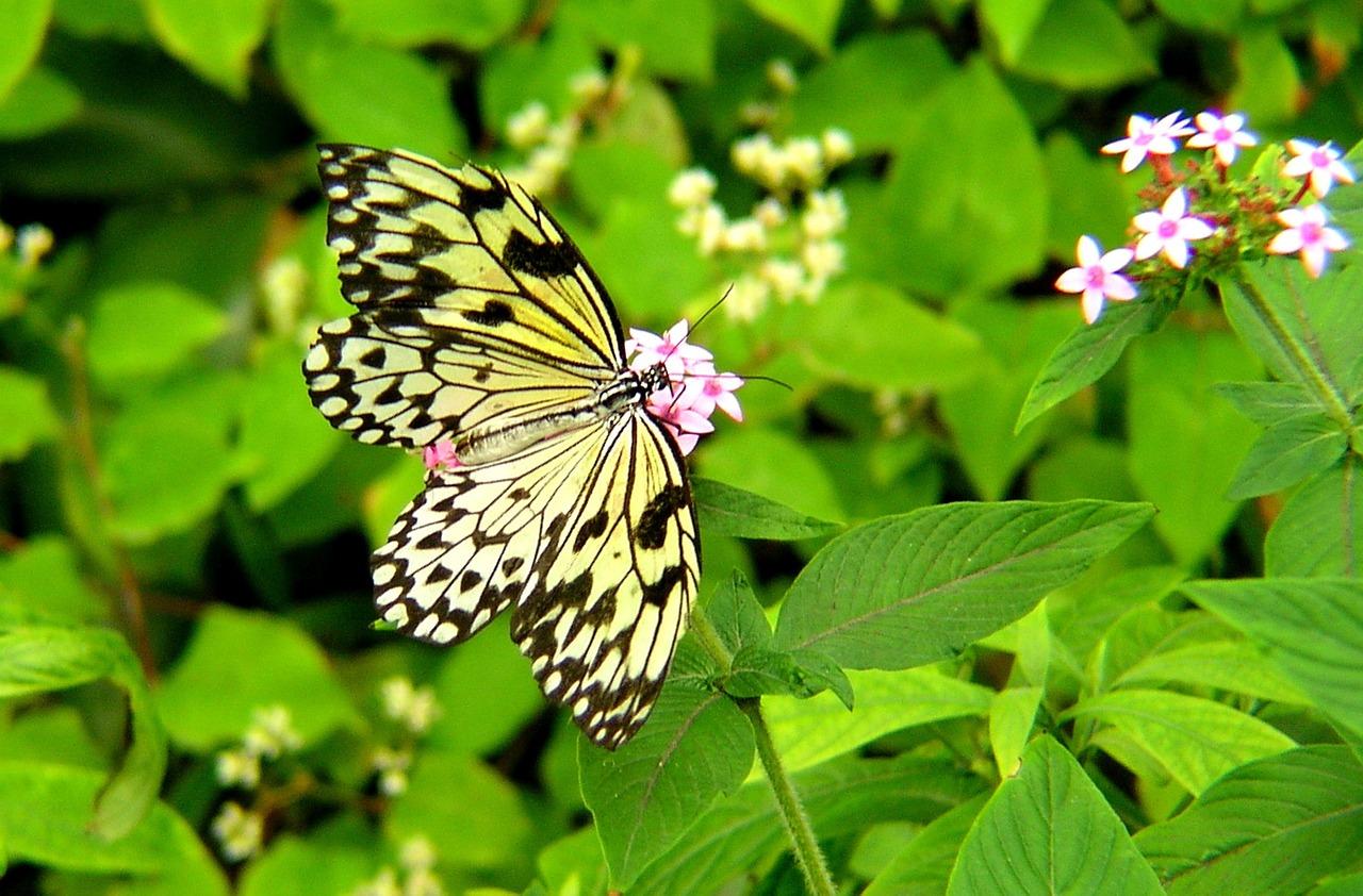 butterfly-799153_1280